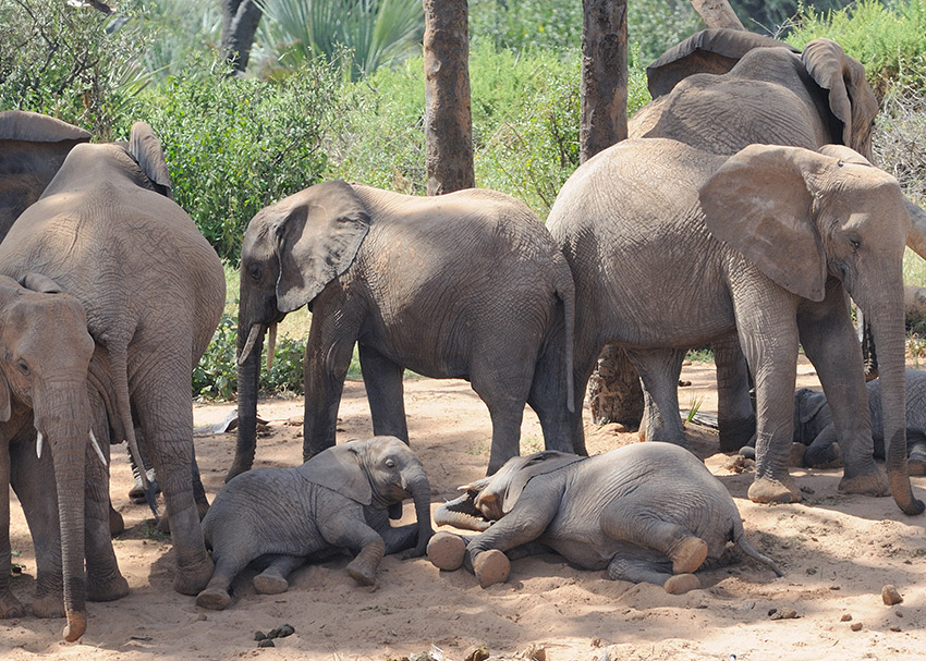 Babies often rest in shade while adults stand guard. (Photo credit: Carl Safina)